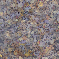 Free texture of leaves on the ground in fall.