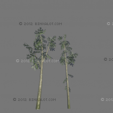 Two weed trees for use in 3d games. 434 polygons with both trees combined. Includes all textures for leaves and tree, bump map, alpha, and spec maps for leaves and bark.  Textures included are in DDS format.
