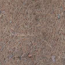 Close up of pine needles and twigs. Location: Maine, USA.
